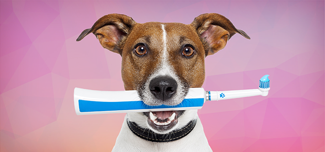 How Brushing Fido's Teeth Helps Your Pet and Your Kids